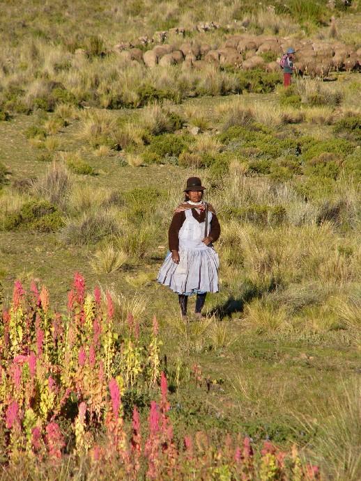 agriculture Altiplano