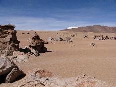 arbol de piedra bolivie