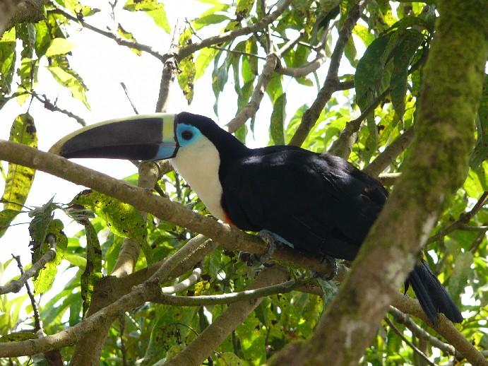photo toucan